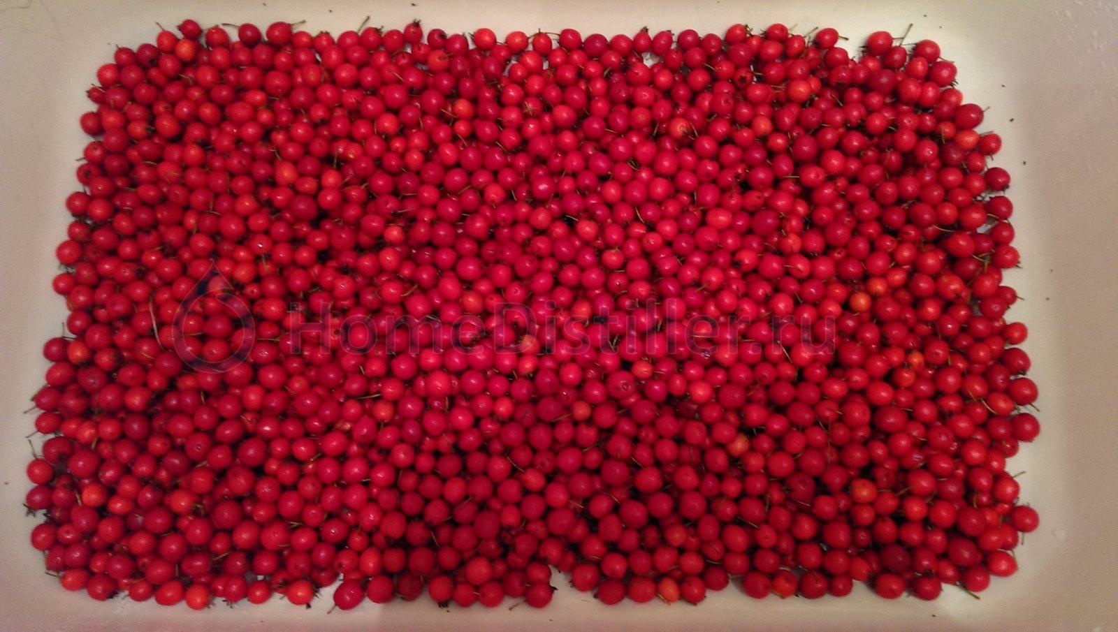 Вымытые плоды боярышника.